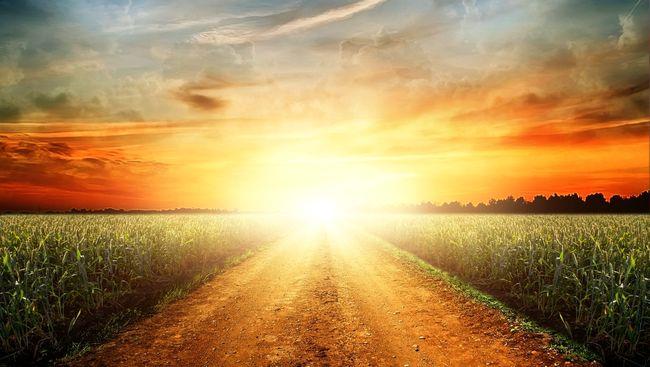 Обычная сельская дорога