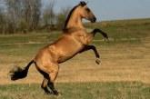 1 лошадиная сила равна